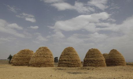 Mounds of teff dry in fields in Ethiopia. (TheGuardian/Julio Etchart/Alamy)